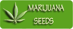 medical marijuana seeds, medicinal marijuana seeds, cannabis seeds, high quality marijuana seeds, weed seeds, pot seeds